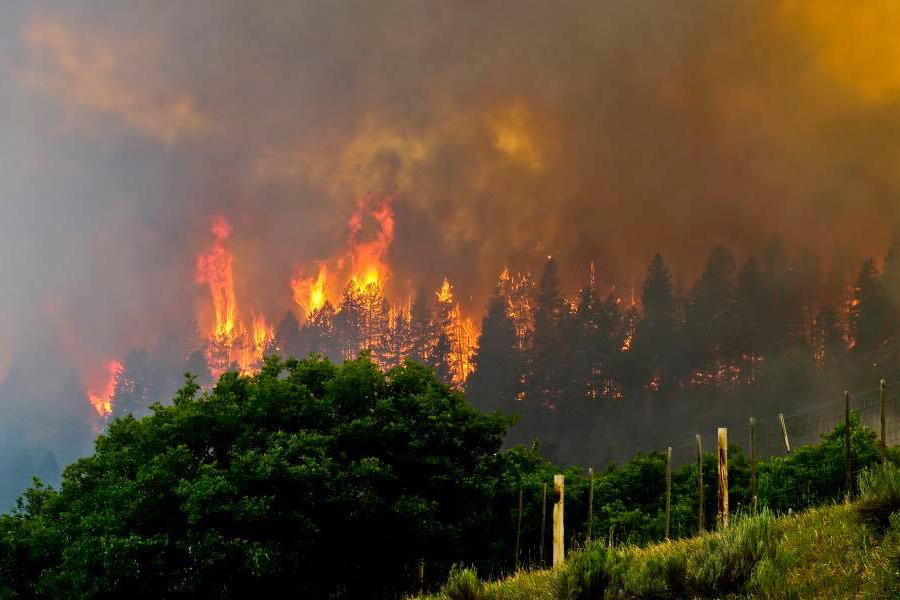 Photo: 416 Fire June 3 | Flames