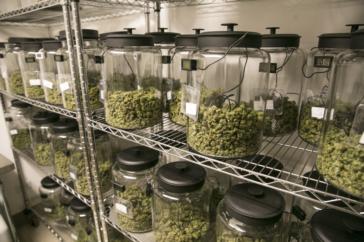 Photo: Marijuana buds July 2015