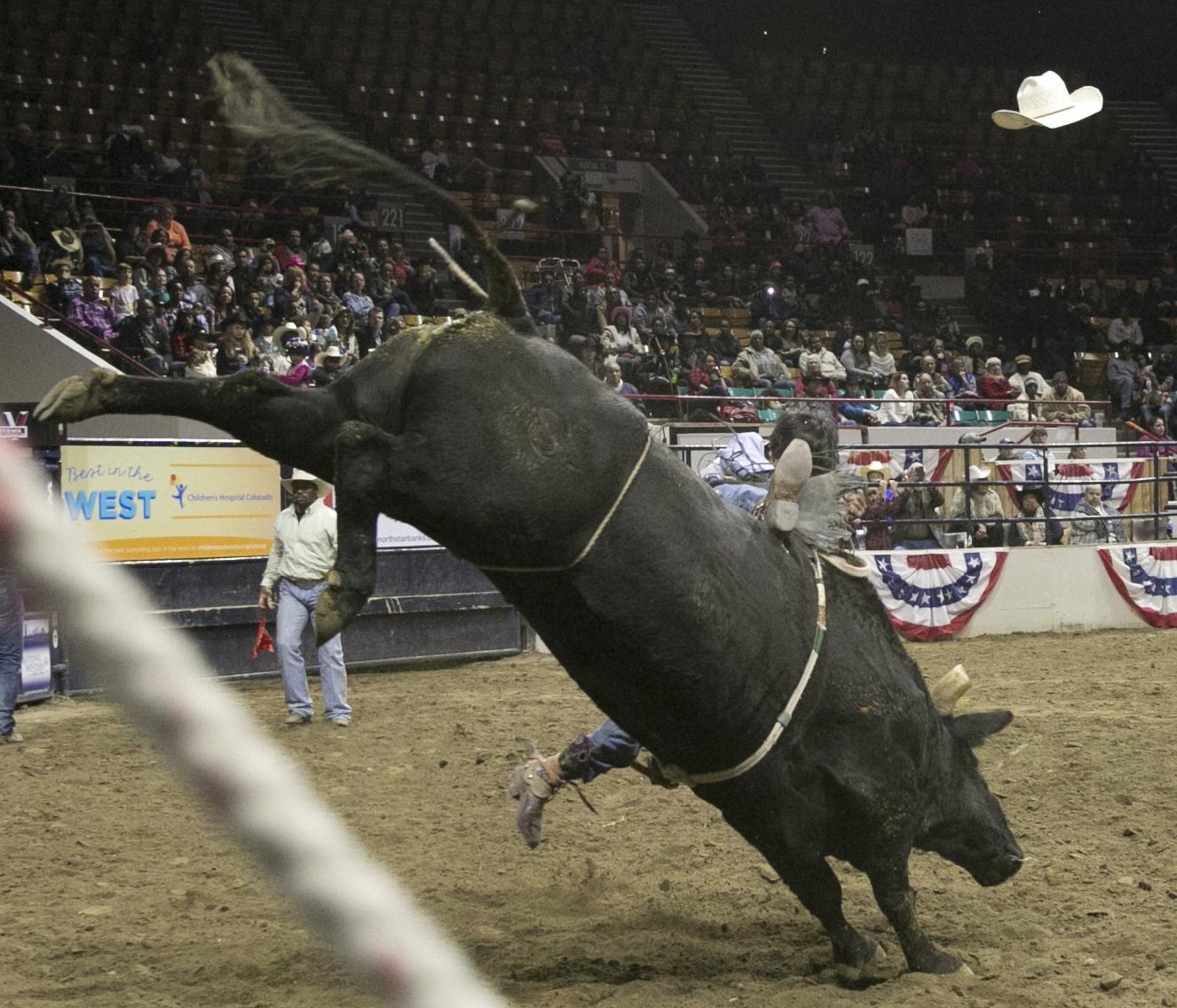 Photo: MLK Rodeo 13 | Bull RIding Tyson Tsinajinnie