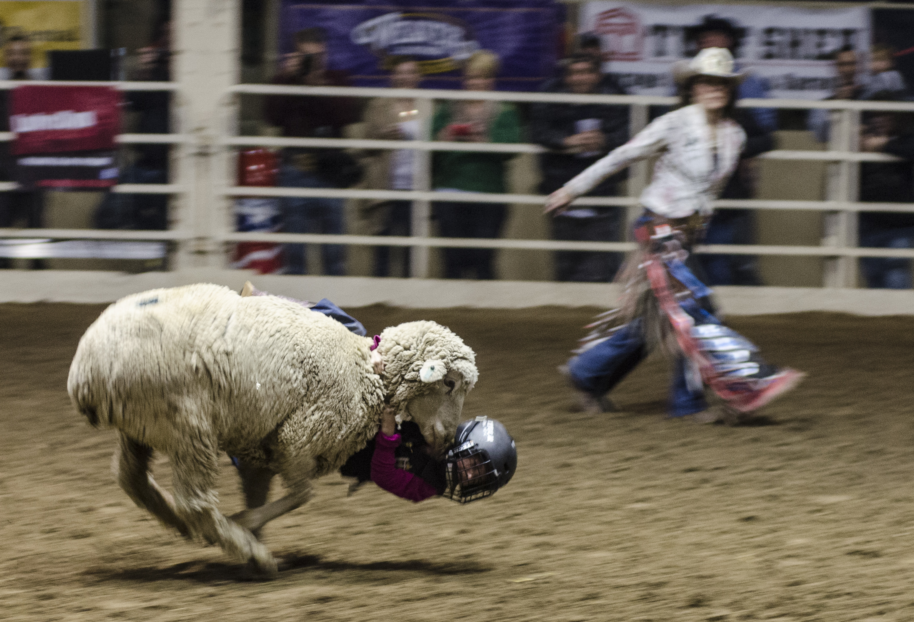 Photo: 6-year-old mutton buster Sydney Babi