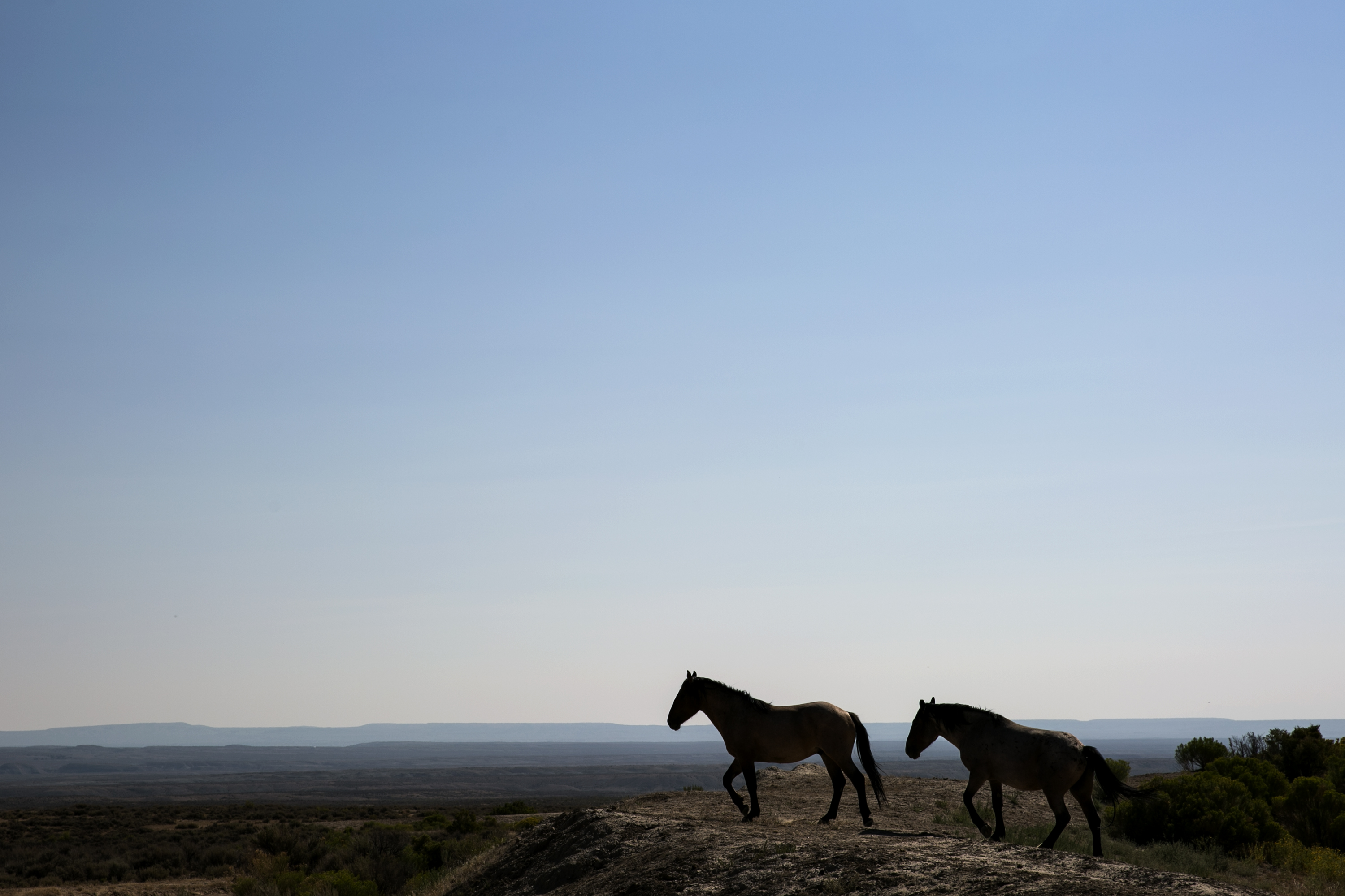 Photo: Election Road Trip Highway 40 38 | Sand Wash Wild Horse Management Area 4