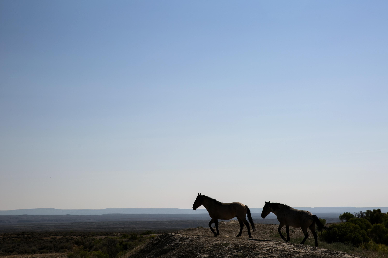 Sand Wash Wild Horse Management Area 4