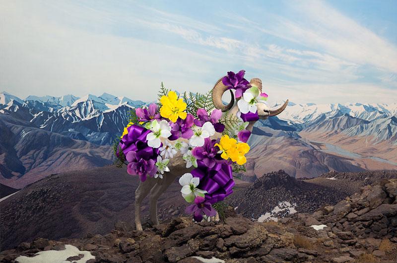 Photo: Purple Mountain Majesty by Jason DeMarte