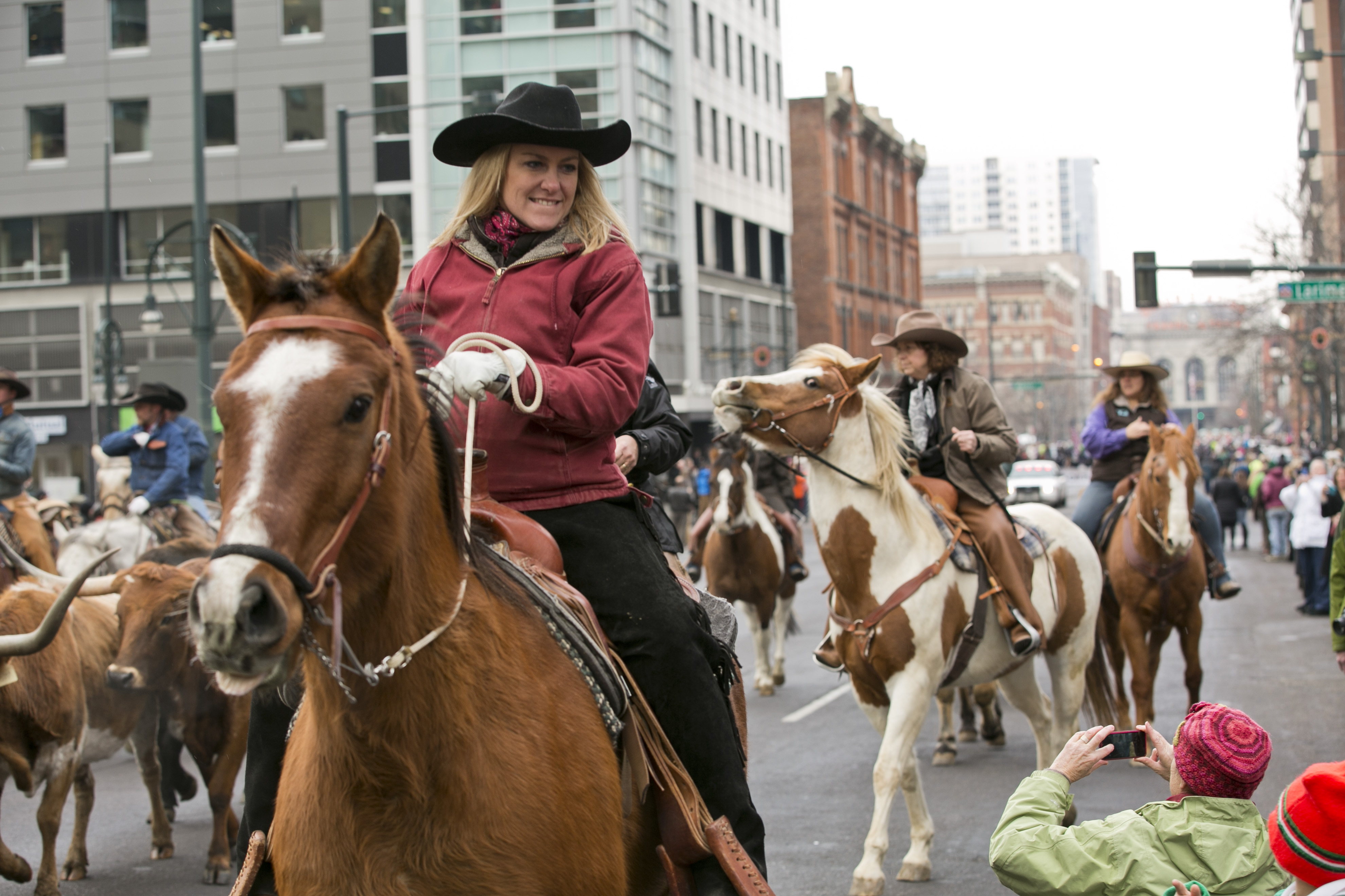 Photo: Stock show parade 4 | Marlene Reynolds drives steer