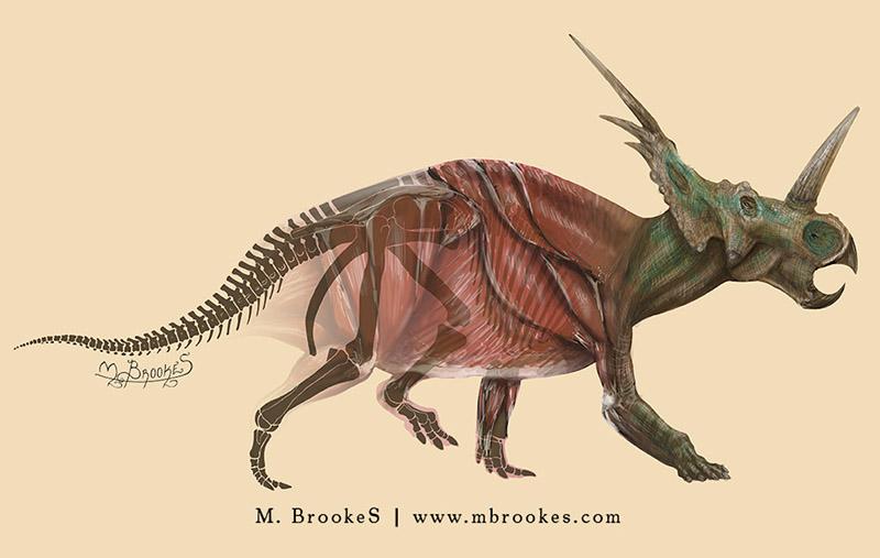Styracoraurus illustration