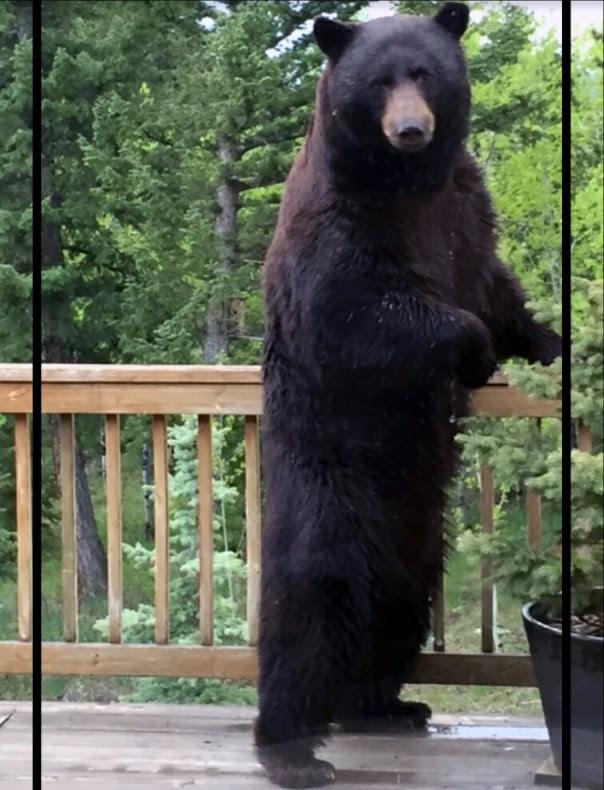 Photo: Bear Encounter
