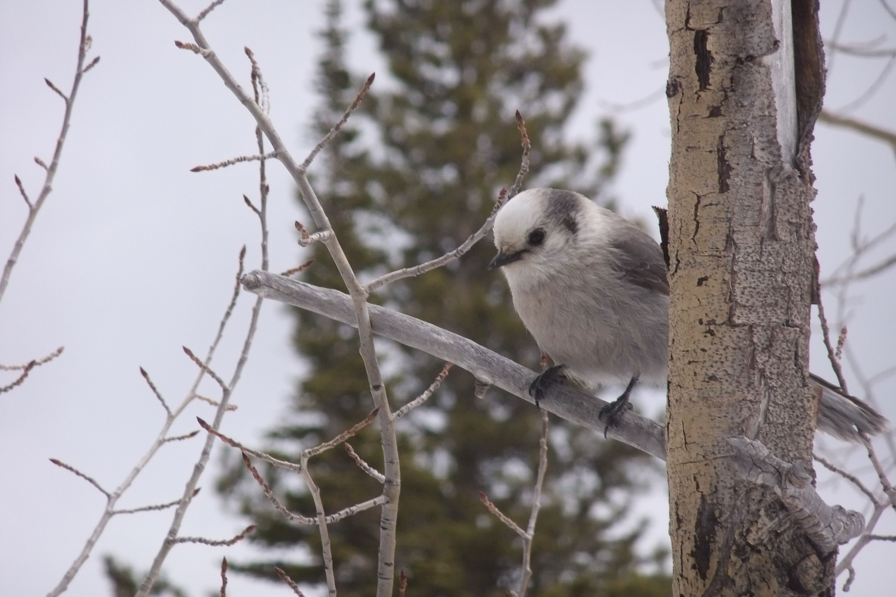 Wild Sounds Of The West: Birdsong Is The Soundtrack Of Rocky