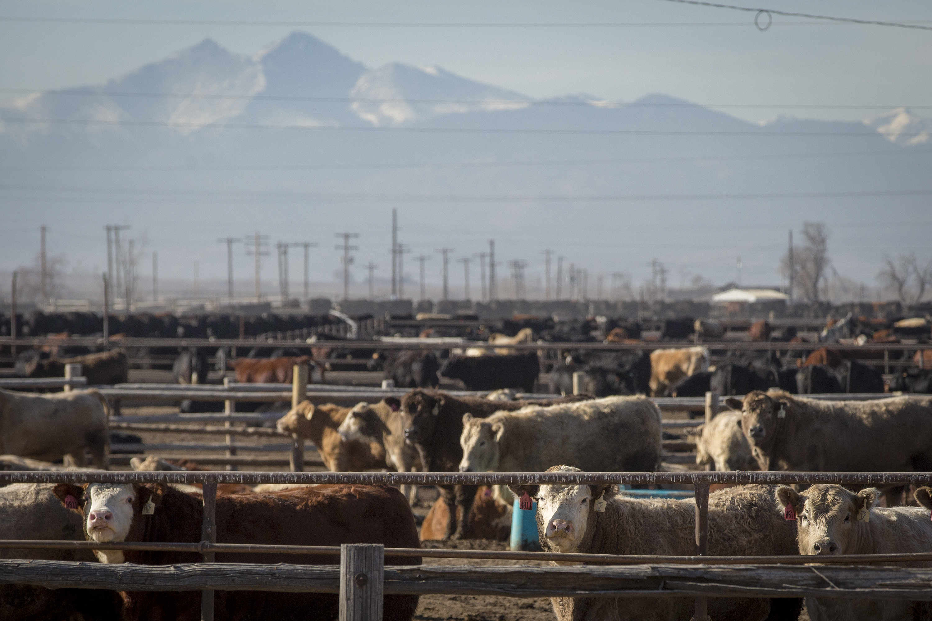 Photo: Five Rivers Cattle Feeding Weld County 20181214