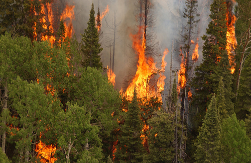 Photo: wildfire 1 (file)