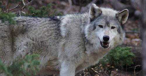 Photo: WOLF Sanctuary 1