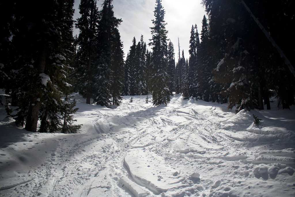 Photo: Wolf Creek ski area forest (Flickr/CC)