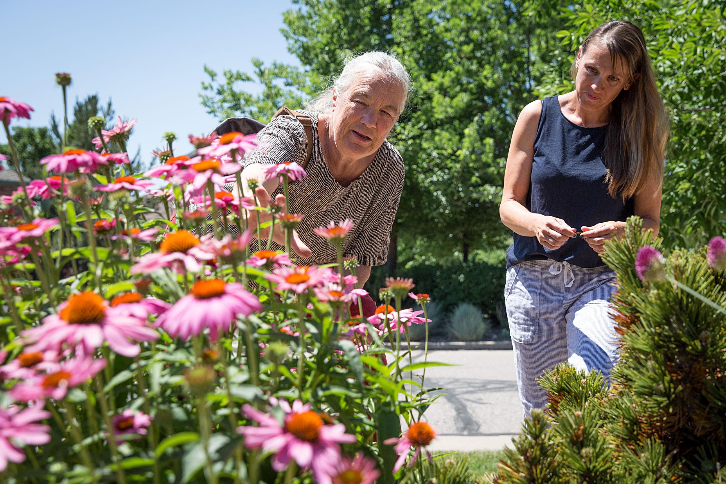 Sustainable Gardening Lakewood Colorado Wonders