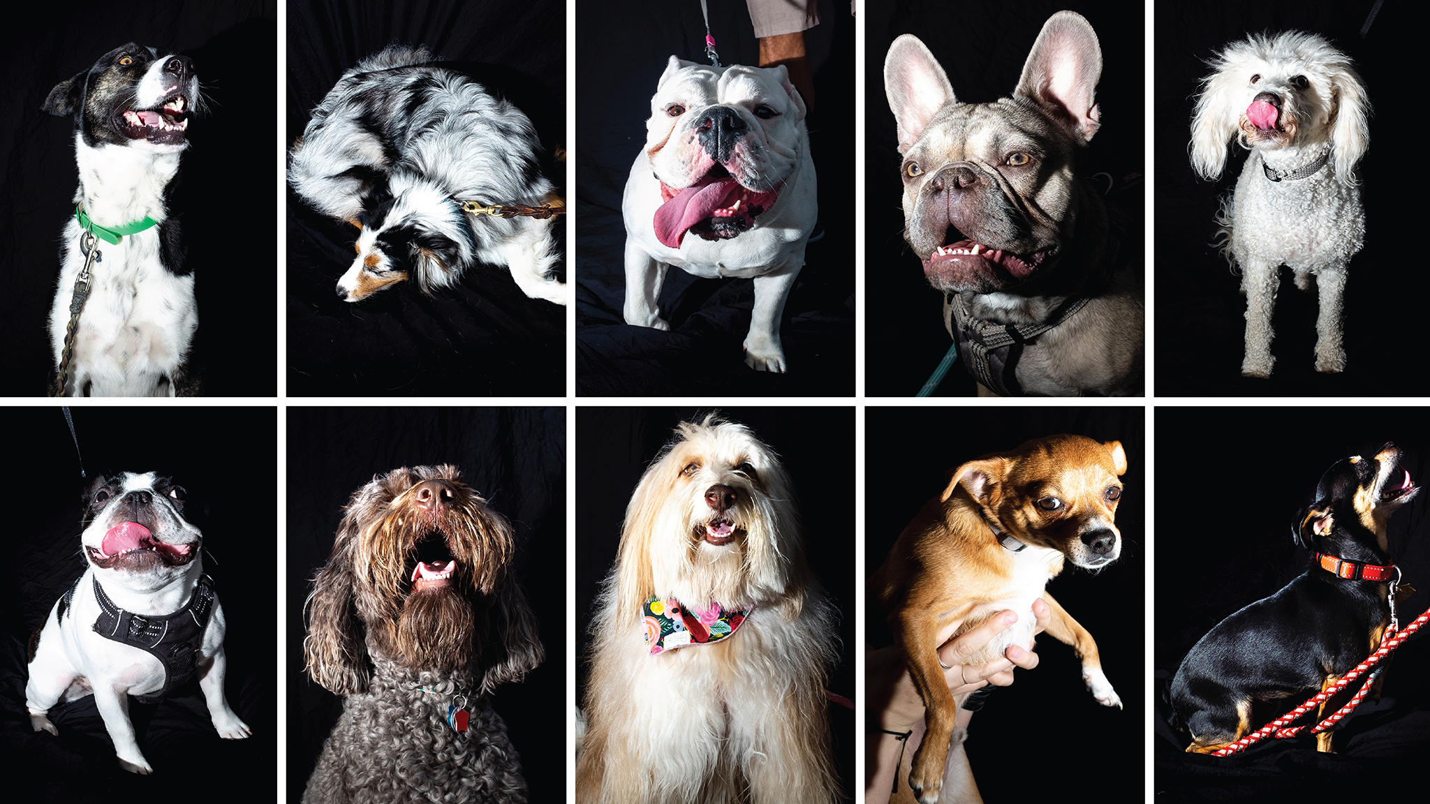 Some of the dogs we met at City Park Jazz, July 14, 2019. (Kevin J. Beaty/Denverite)