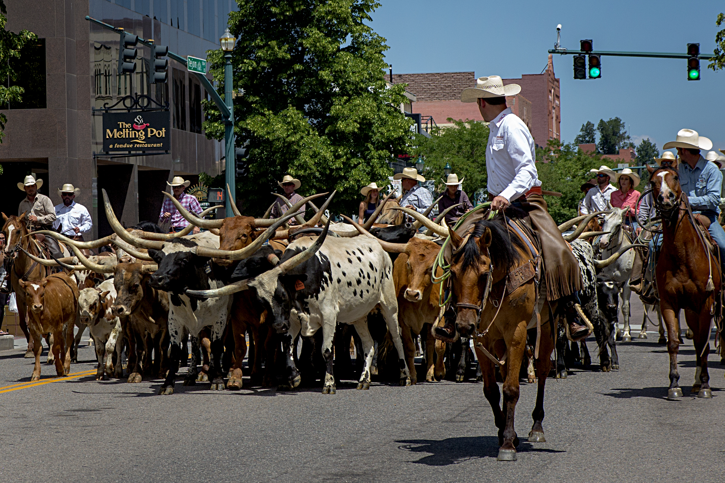 Cowboys keep an eye on a small herd of longhorn cattle lumbering down Tejon Street in Colorado Springs on Aug.  2, 2019. The parade kicks off the Ride for the Brand rodeo at the Norris Penrose Event Center this weekend.