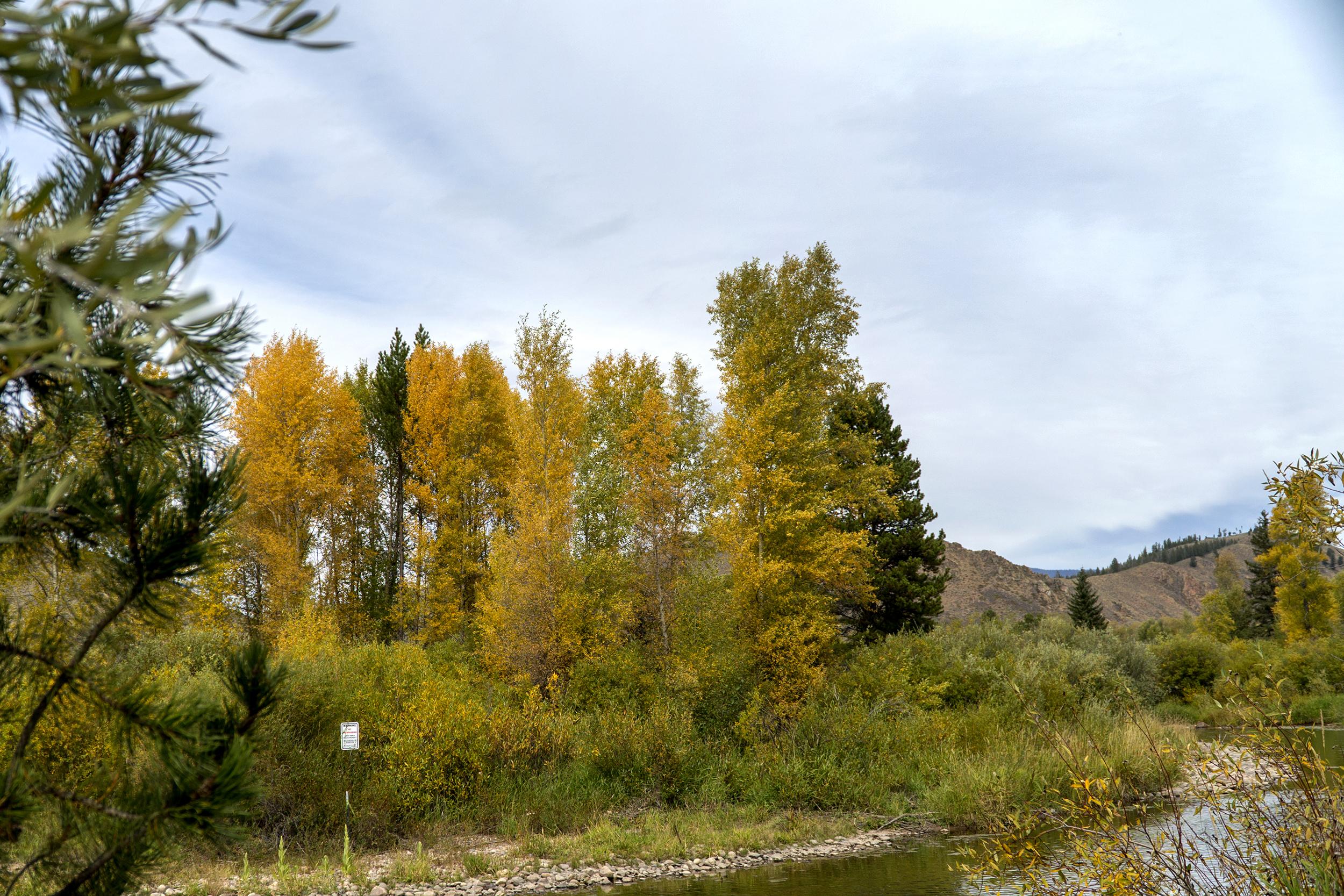 Fall Foliage Granby