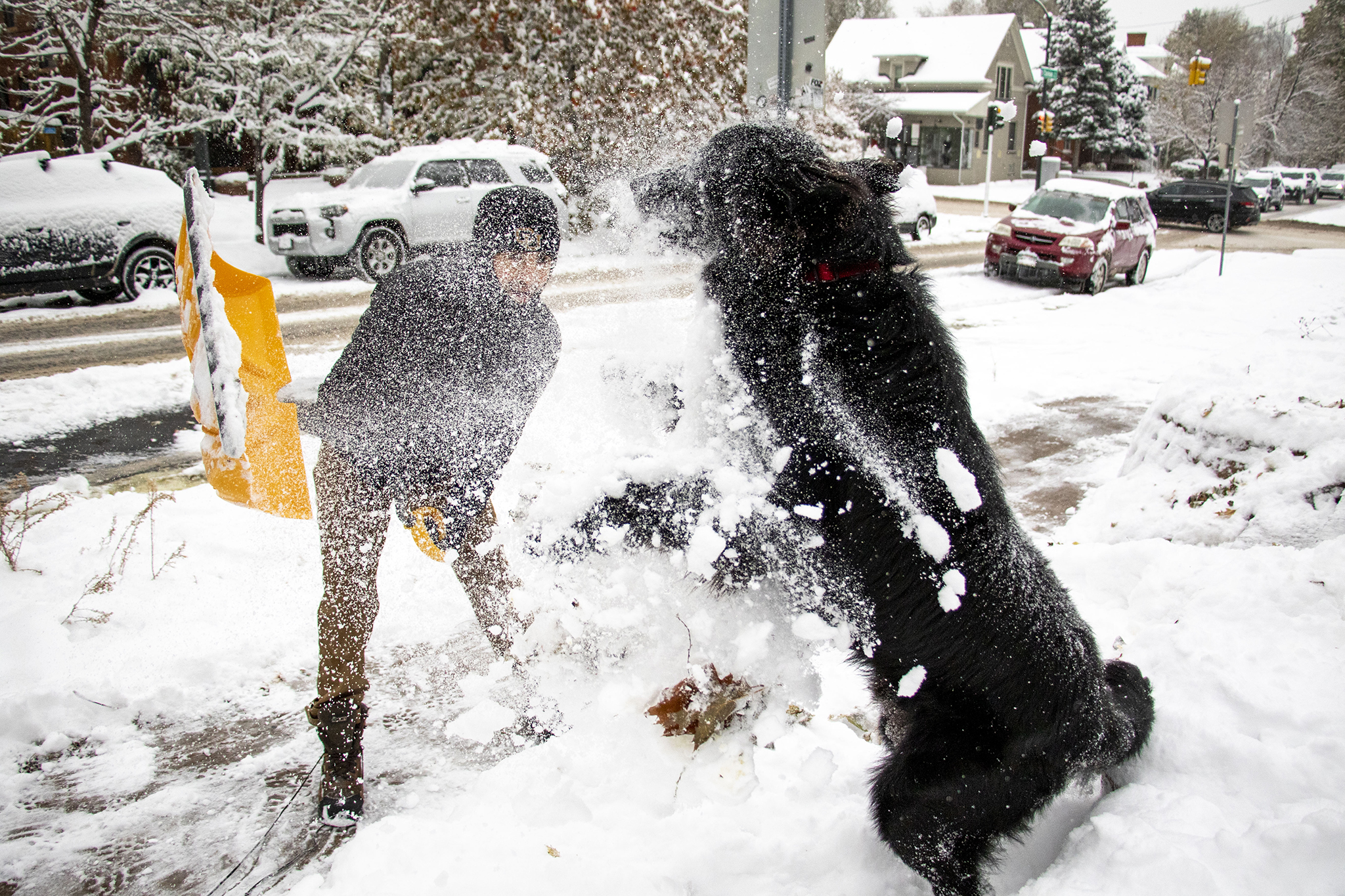 Moose plays with his human, Luke Yeager, in the snow on Capitol Hill in Denver on Oct. 28, 2019.