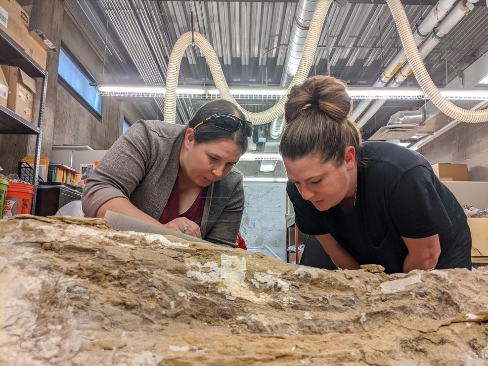 Walter The Dinosaur Fossil at Colorado Northwestern Community College