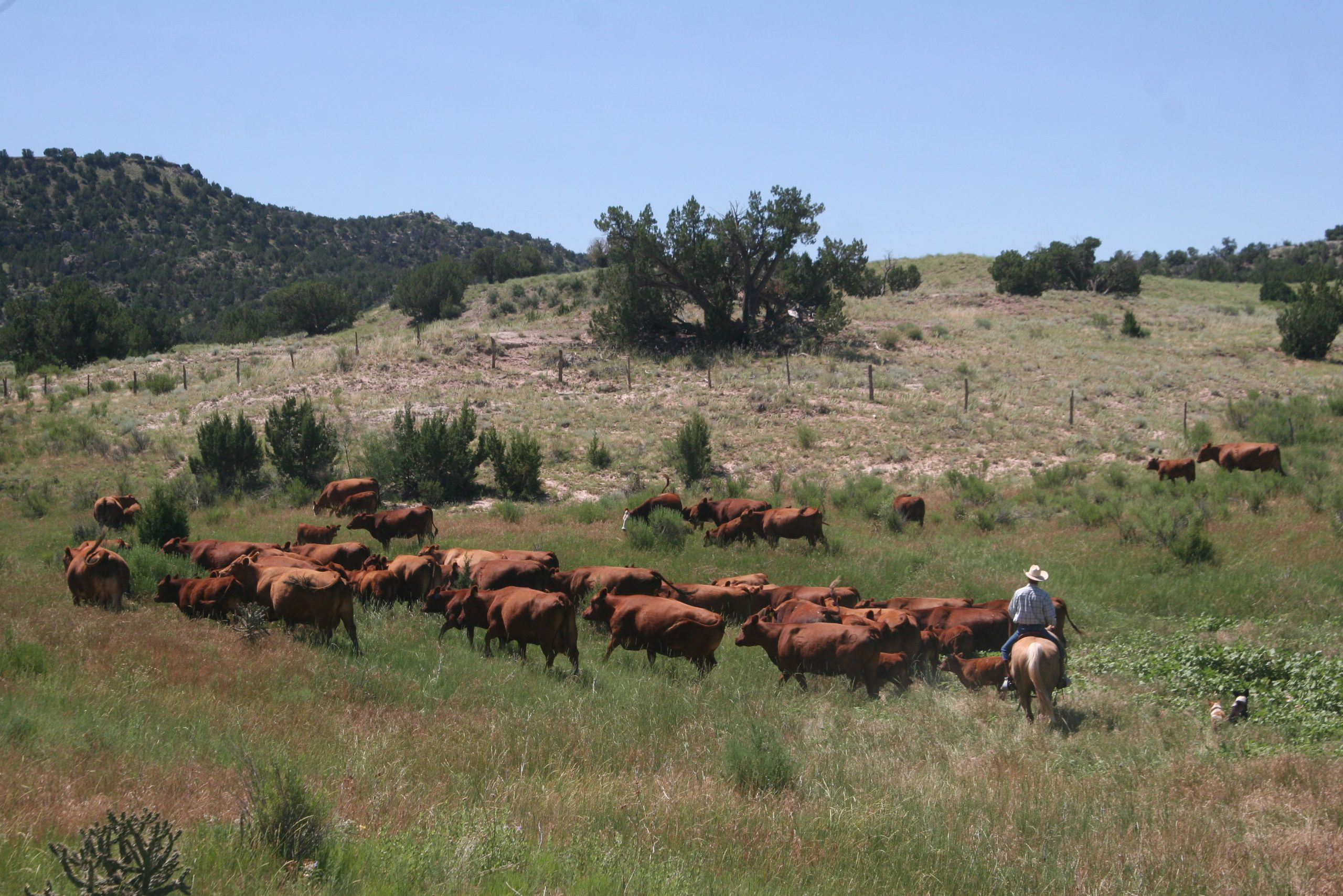 Rancher Steve Wooten herds cattle on his ranch in southeastern Colorado near the town of Kim. The county is the largest in the state and one of the least populated.