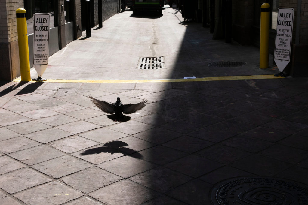 A pigeon has a portion of Denver's 16th Street Mall to itself
