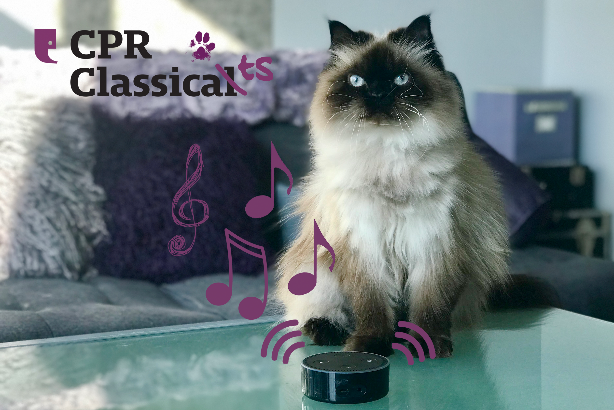 A cat named Bella sits on a table listening to a smart speaker with cartoon music notes floating out of it.