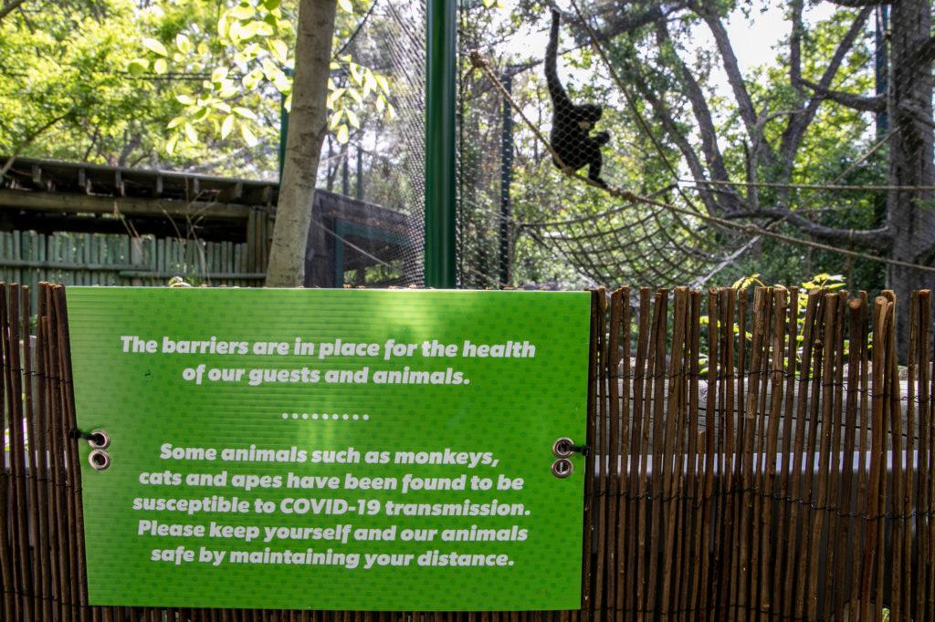 Denver Zoo Reopening