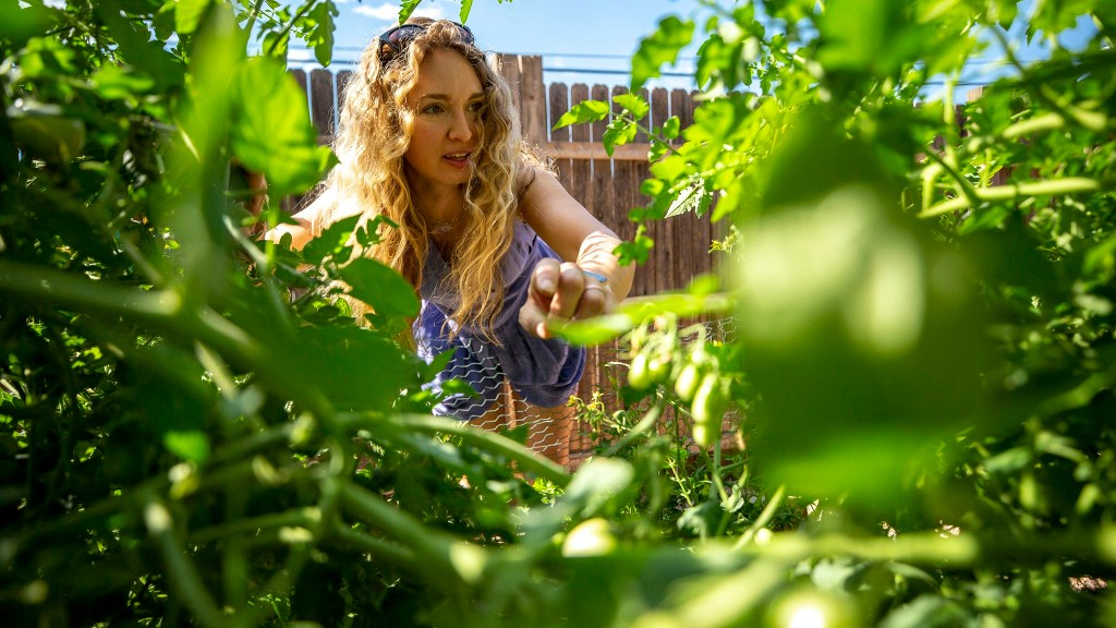 Pamela Talley inspects her backyard garden in Denver's Clayton neighborhood for extra vegetables to donate to Fresh Food Connect on July 21, 2020.