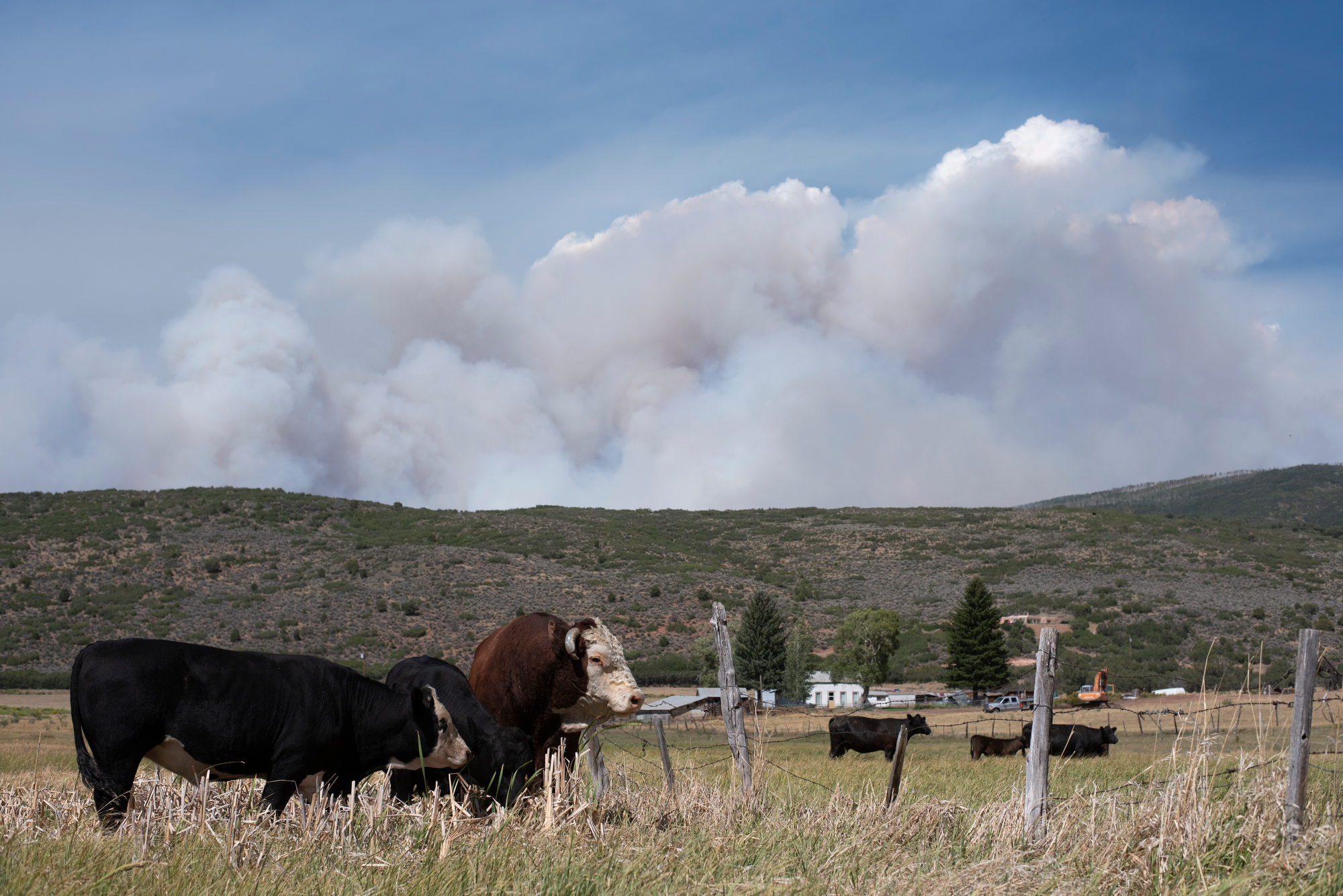 GRIZZLY CREEK FIRE GLENWOOD SPRINGS LIVESTOCK 200813