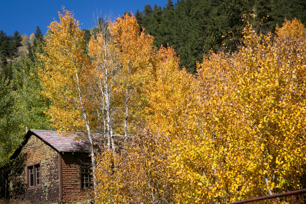 FALL FOLIAGE COLORS ASPENS