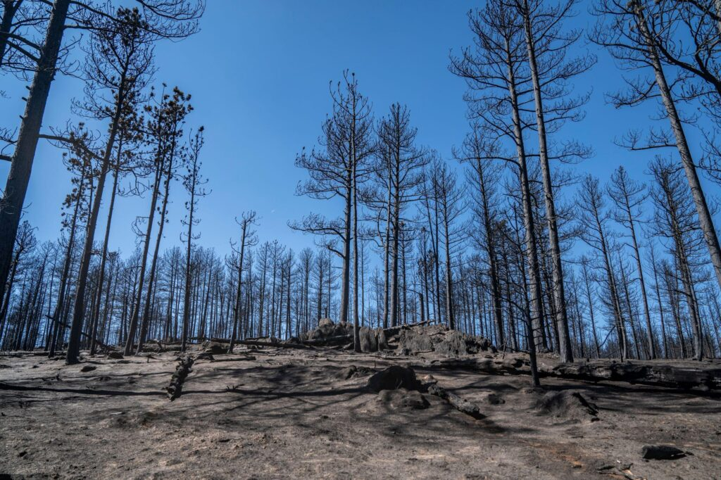 Cameron Peak fire leaves a forest of burned trees