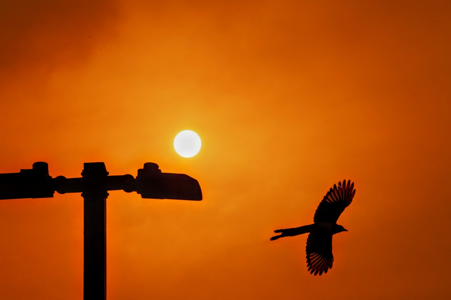 In a parking lot in Estes Park under a smoky sun, a magpie takes flight. Ash from nearby the nearby Cameron Peak and East Troublesome fires drizzles on the ground. Oct. 22, 2020.