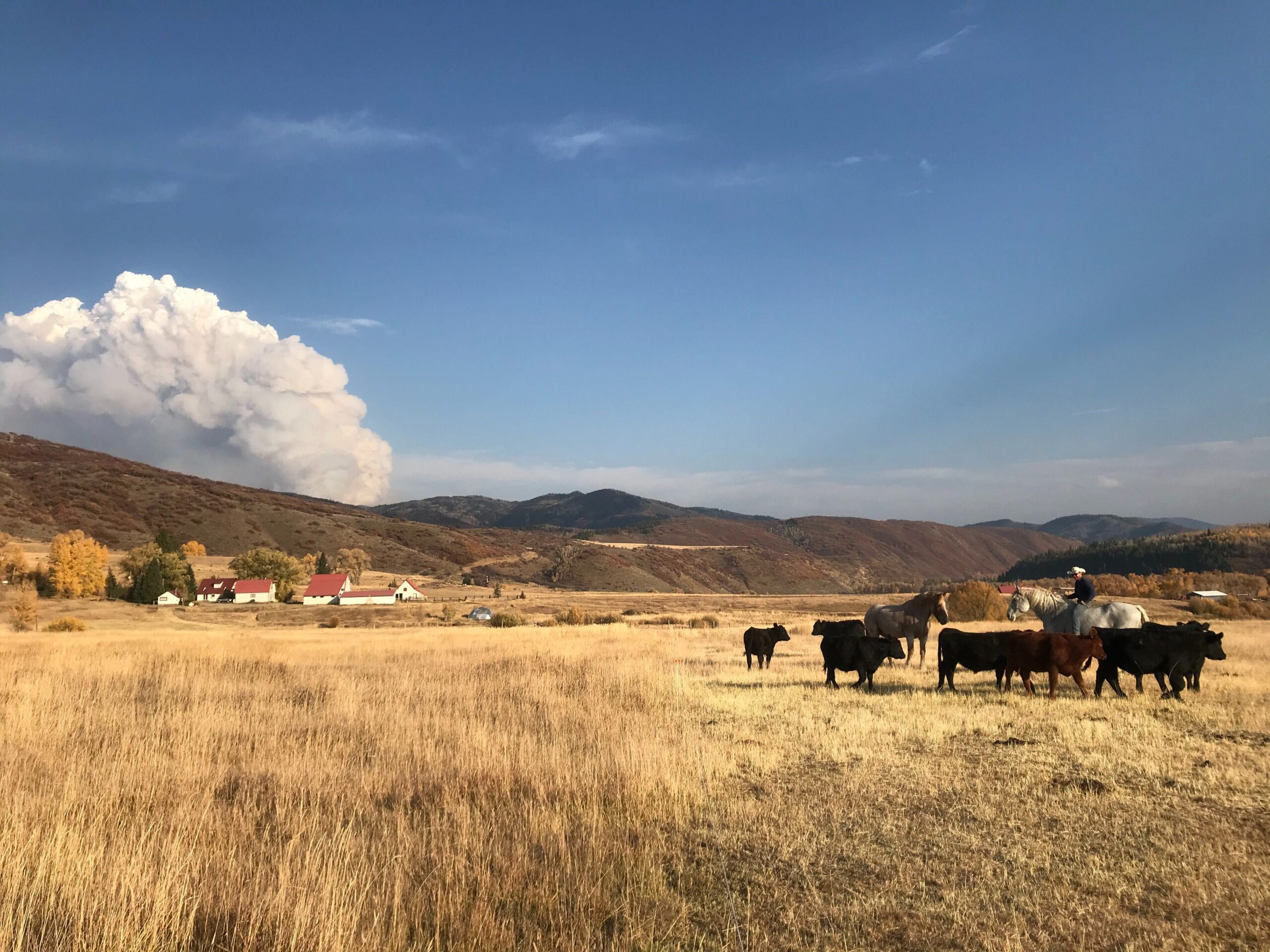 A rancher with his horse and cattle in Routt County, with the Middle Fork fire burning in the background, October 8, 2020.