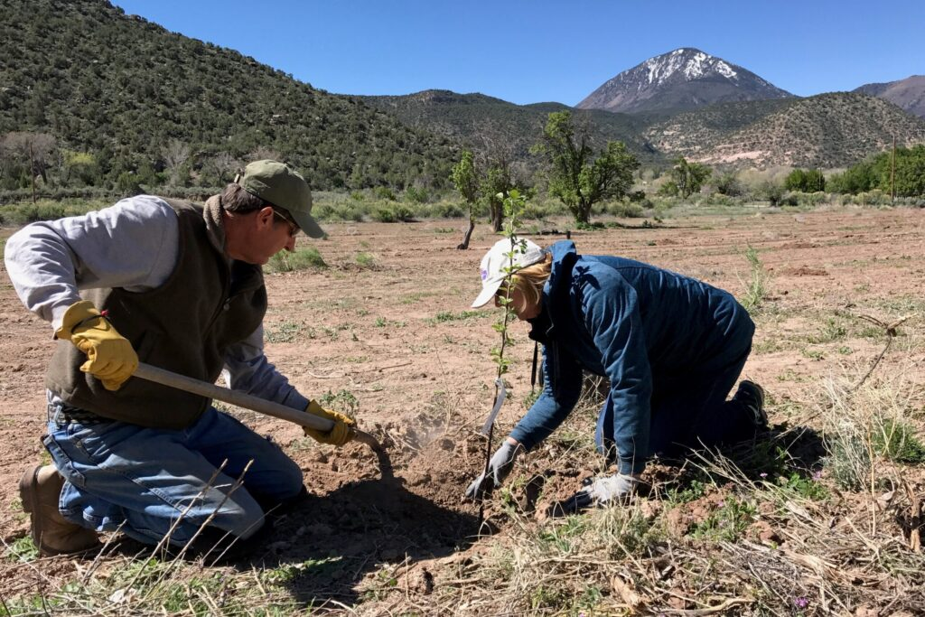 Gold Medal Orchard Montezuma County Colorado Endangered Places