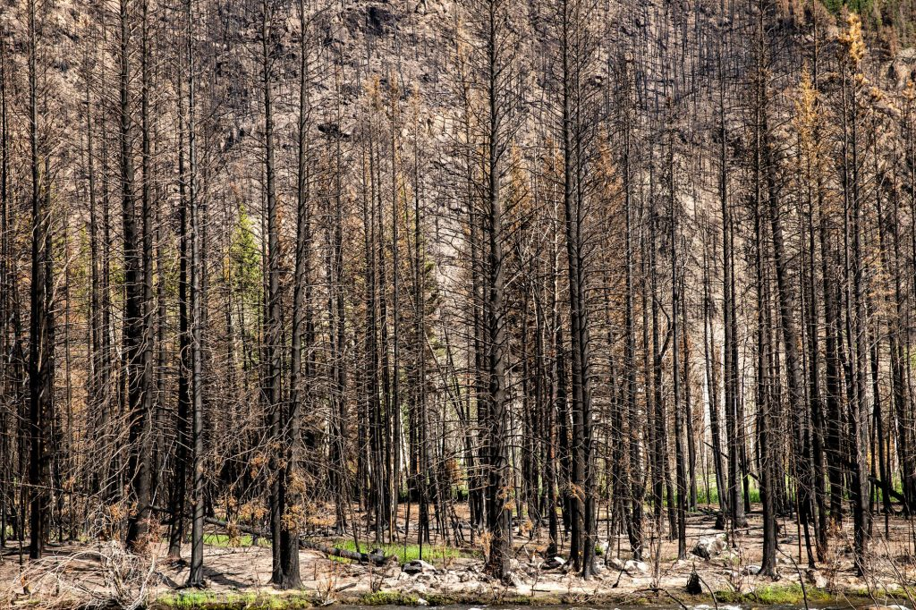 CAMERON-PEAK-WILDFIRE-BURN-SCAR